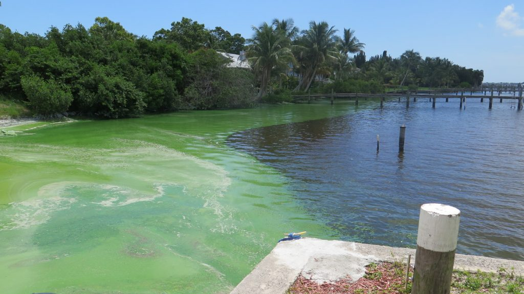 """Florida Blue-Green Algae Task Force: """"If you see a bloom, don't go in the water."""""""